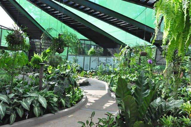 Pathway inside conservatory