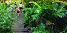 Walkers on the Green Arrow walking track