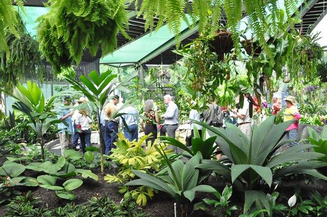 Inside of Watkins Munro Martin conservatory at Cairns Botanic Gardens