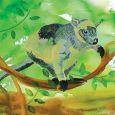 Tree Kangaroo 230x230 .jpg