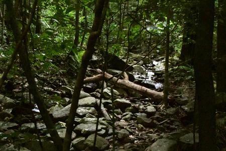 Rainforest Talk 450x300