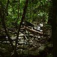 Rainforest Talk 230x230