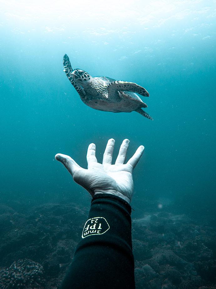 Ocean Film Festival World Tour 2020 image